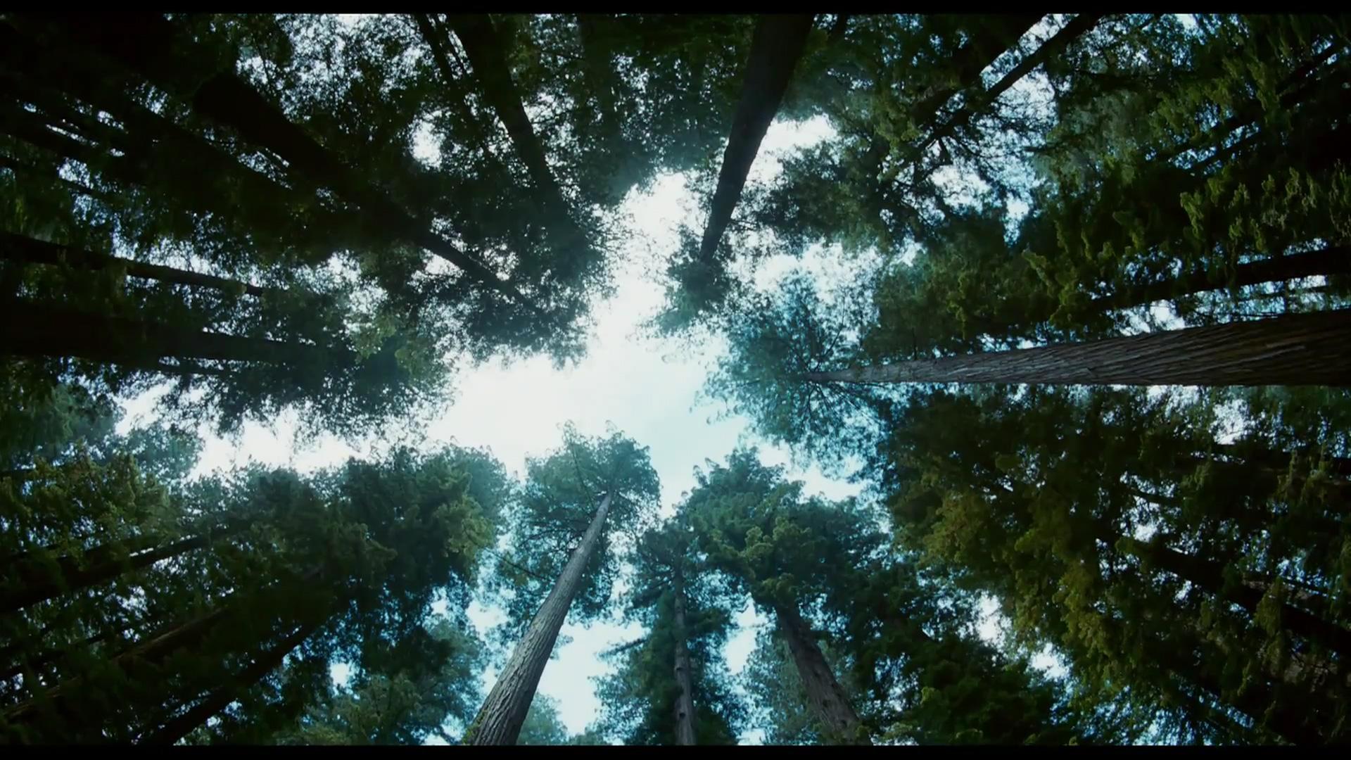 The Tree of Life - Trees